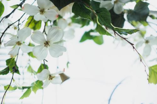 Flower Coordinate